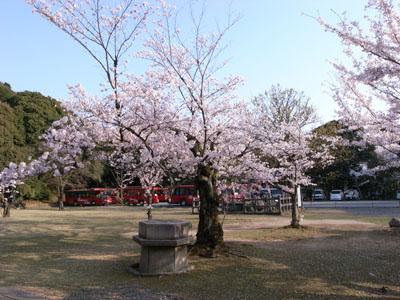 kyotosakura10