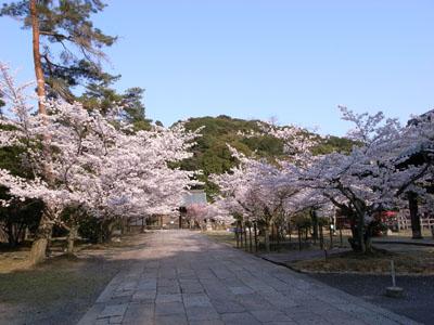 kyotosakura11
