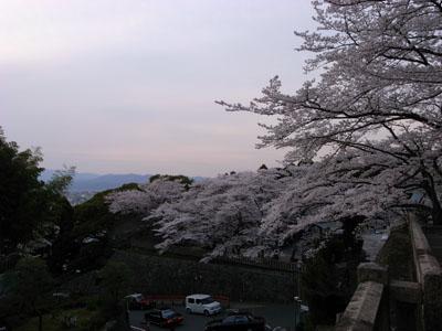 kyotosakura14