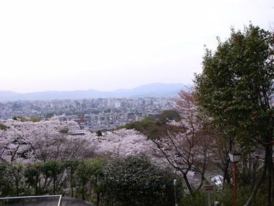 kyotosakura15