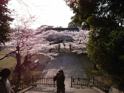 kyotosakura2