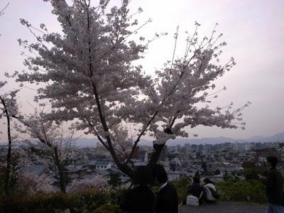 kyotosakura21