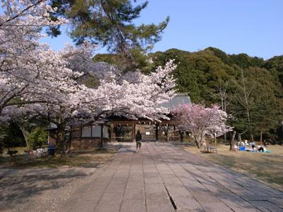 kyotosakura9