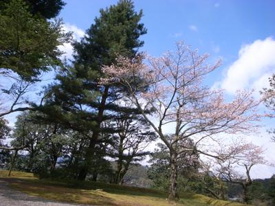 20100329_rikyu01
