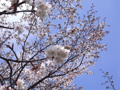 20100329_rikyu24
