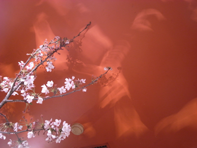 20100408_nagoya_mago4