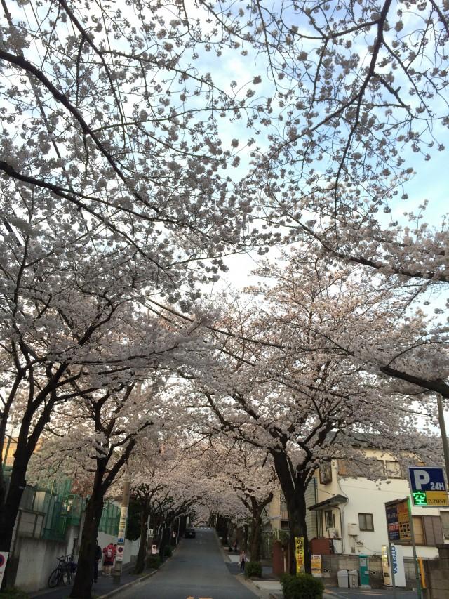 sakura-street